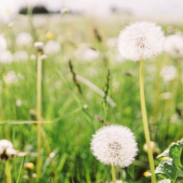 Natural Hay Fever Relief Guide