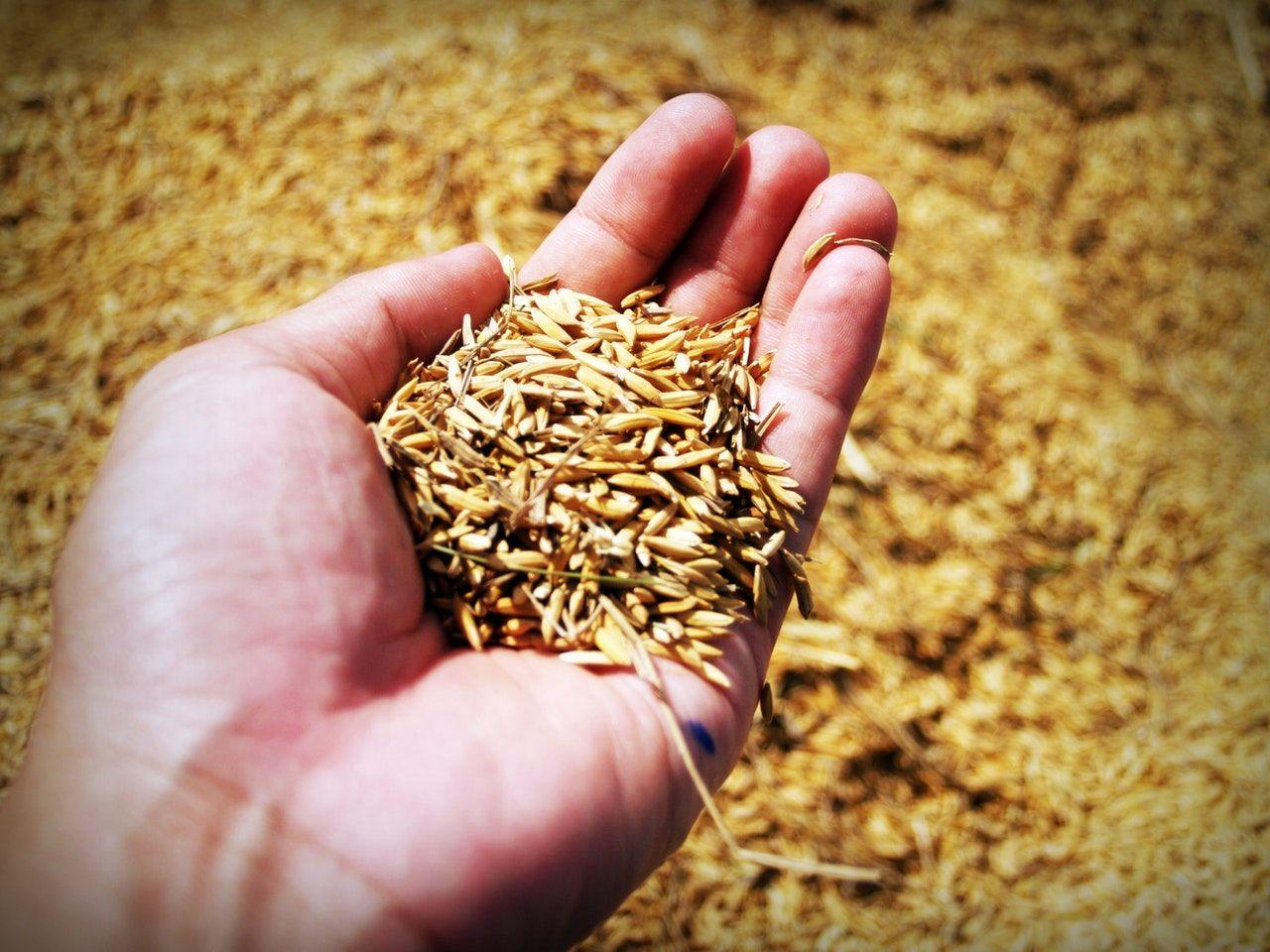 Benefits of a whole grain diet