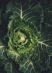 cabbage lettuce health benefits
