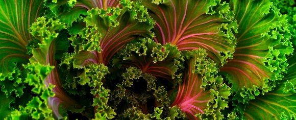 leafy greens benenfical to male memory