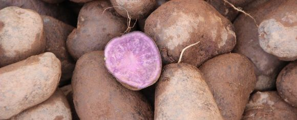 purple potatoes for health benefits